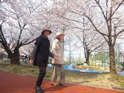 桜を見上げると背筋も伸びます