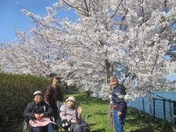 枝の先まで満開の桜!桜!桜!
