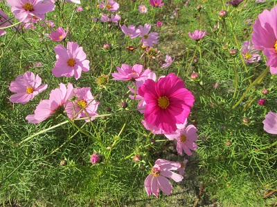 風に吹かれて花びらふわふわ