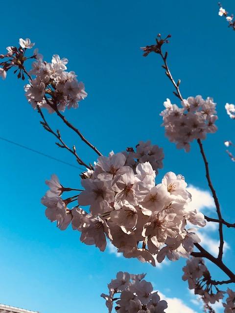 2021年桜もきれいだったね。