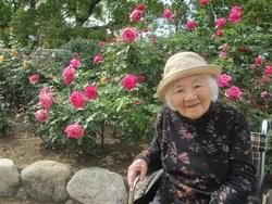 ピンクのバラの花言葉「しとやか」「上品」