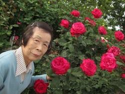 赤いバラの花言葉「愛情」「美」「情熱」