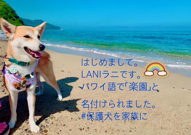 LANI 海へ行く!